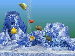 Красивый аквариум с рыбками заставка на рабочий стол