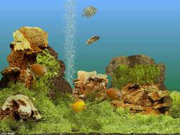 Заставку с аквариумными рыбками скачать